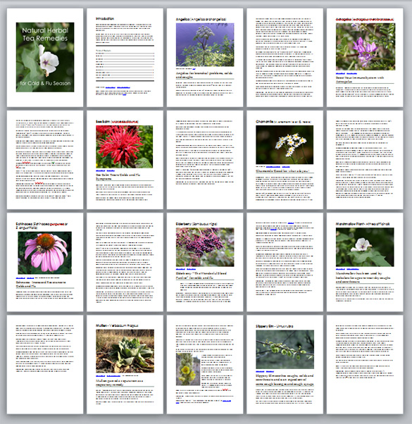 20 pages or herbs plr content